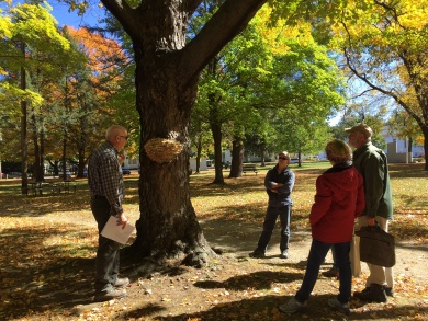 Dan (far right) with members of the Brattleboro Tree Advisory Committee and Certified Master Arborist Mark Duntemann, assessing the health of trees on the Brattleboro green.
