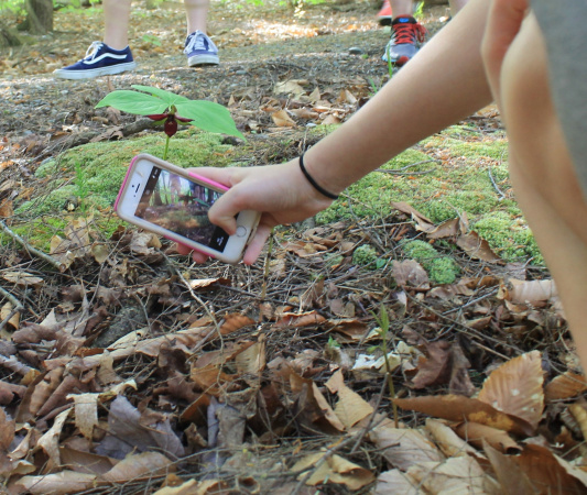 iNaturalist Tutorial | Vermont Urban and Community Forestry